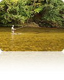 The-Basics-of-Fly-Fishing-reflection