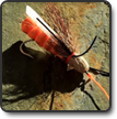 Advanced Tactics