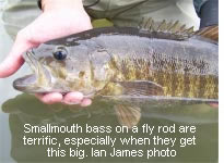 Smallmouth bass on a fly rod are terrific, especially when they get this big.  Ian James photo