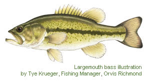 Largemouth bass illustration by Tye Krueger, Fishing Manager, Orvis Richmond
