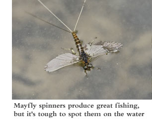 Mayfly spinners produce great fishing, but it's tough to spot them on the water